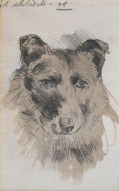 """""""Collie Dog"""" by FCB Cadell, 1908"""