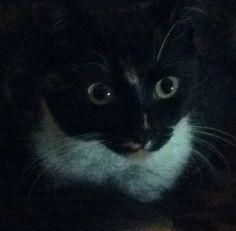 My Puss