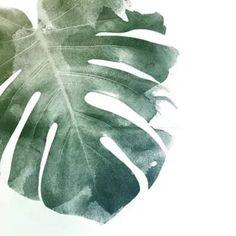 растение монстера рисунки акварелью: 10 тыс изображений найдено в Яндекс.Картинках