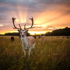 Sunset in Phoenix Park, Dublin