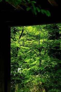 夏への入口 #緑 #Green