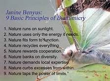 biomimicry - Yahoo Image Search Results
