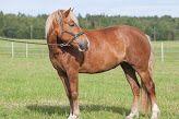 Koivikon Katveessa: Tulostettavaa materiaalia varhaiskasvatukseen Horses, Education, Animals, Animales, Animaux, Animal, Onderwijs, Animais, Learning