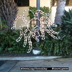 Day 30 Lights. Sorry D! Someone else's idea of a joke to make a spider from lights. Taken on 1 January 2010 at the San Diego Zoo. .. #GenealogyPhoto #GenealogyPhotoaday #genealogy #familyhistory #myfamilyhistory