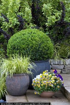 Very nice grouping of containers with a similar growth/pruned habit.