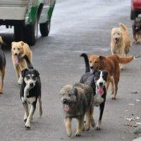#dogalize En Colombia comienza el primer censo para perros #dogs #cats #pets
