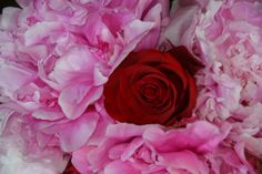 Pink Peonies and Red Roses Bouquet