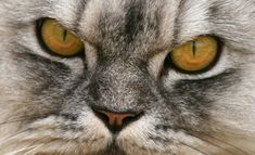 Is Your Cat a Bully?   could this be our TJ?  sure will continue to work with him, cause we can't have a bully in 'the cat cabin'...