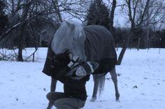 Car l'air du paradis, est celui souffle entre les oreilles du cheval. ♥