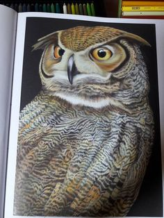 Great Horned Owl 2 By Marcela D OwlColoring BooksAdult