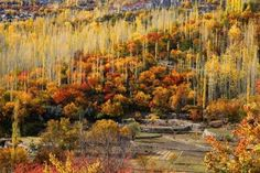 6. The unbelievable shades of Autumn that transforms the entire country into something only an artist could imagine - The breathtaking Hunza Valley