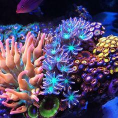 Aquarium Care Tips for Saltwater Fish Saltwater Aquarium Setup, Coral Reef Aquarium, Saltwater Fish Tanks, Marine Aquarium, Aquarium Fish Tank, Coral Reefs, Jellyfish Aquarium, Underwater Plants, Underwater Sea