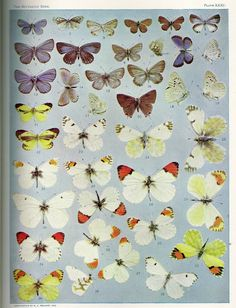 free botanical and butterfly printables