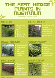 Hedges Landscaping, Front House Landscaping, Garden Hedges, Backyard Landscaping, Garden Trees, House Landscape, Landscape Design, Garden Design, Front Yard Hedges