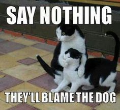 Say Nothing! - Funny Animal Quotes - - 30 Funny animal captions part 13 pics) animal pictures with captions funny memes Animals Memes Memes Memes with The post Say Nothing! appeared first on Gag Dad. Funny Animal Quotes, Cute Funny Animals, Funny Animal Pictures, Funny Cute, Cute Cats, Crazy Funny, Clean Animal Memes, Funniest Pictures, Cat Quotes