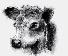 One of my sketch a day drawings Bull calf #calf #drawing #Herefordbull #sketch