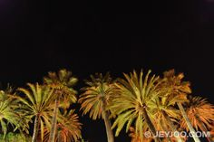 Jeyjoo Images: Palm trees at night. Download free stock images