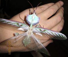 tagged/flora