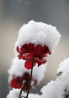 Snow In Tehran | Flickr - Photo Sharing!