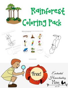In this fun coloring pack your child or students will be transported into the rainforest to interact with various aspects of the rainforest through the combination of art skills and memory fun. Preschool At Home, Preschool Science, Science Education, Teaching Science, Preschool Crafts, Preschool Ideas, Rainforest Biome, Rainforest Activities, Activities For Kids