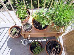 pots of green