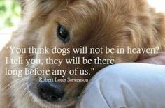 Dogs Will be in Heaven Before Us