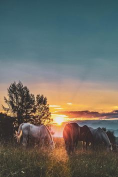 three assorted-color horses standing on green grass, Canon, Canon EOS - Tier Hintergrund Iphone Most Beautiful Horses, Pretty Horses, Horse Love, Animals Beautiful, Cute Animals, Horse Wallpaper, Animal Wallpaper, Nature Wallpaper, Green Wallpaper