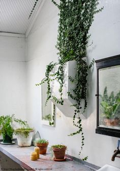 plant1.jpg 700×1000 pikseli