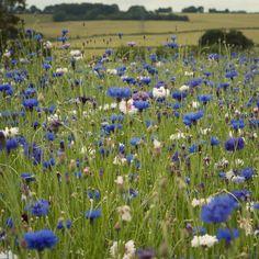 Wild flowers - Folklings