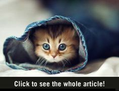 From Japan: Quite possibly the cutest kitten in the world!