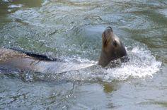 The Photographer's Sketchbook: Omaha Zoo – Sea Lions
