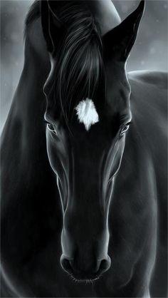 #Horse #Caballo Blanco y negro #Animales