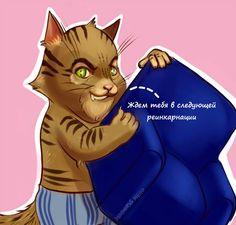 Коты,в среднем, весят в 20 раз меньше человека. Когда вы кидаете в них тапком,это равносильно,что в вас запустить креслом.