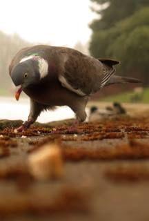 pigeon stance