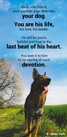 He is your friend, your partner, your defender...your dog!