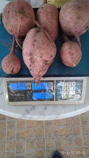 Potatoes, Vegetables, Blog, Potato, Vegetable Recipes, Blogging, Veggies