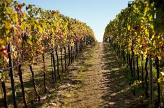 NOVIEMBRE: Calendario Trabajos Viñedo. Vendimias tardías. Vineyard, Outdoor, Garden, Yearly Calendar, Water, Flowers, Outdoors, Vineyard Vines, The Great Outdoors
