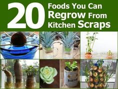 20 foods you can regrow from kitchen scraps.