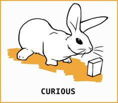 What is that silly rabbit trying to tell me? With an illustrated guide to help you learn about your silly bunny. Rabbit Nose, Rabbit Run, Silly Rabbit, House Rabbit, Pet Rabbit, Bunny Cages, Rabbit Cages, Prey Animals, Cute Animals
