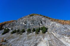 Firs and Larches on a Mountain Firs, City Photo, Mountain, Explore