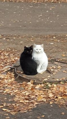 15 Cats And Dogs That Are Like Yin And Yang