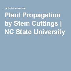 Plant Propagation by Stem Cuttings | NC State University