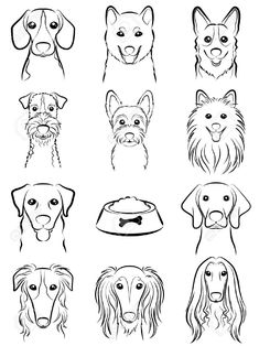 Dog / Line Drawing Royalty Free Cliparts, Vectors, And Stock Illustration. Pic 31655862. #DogDrawing