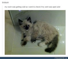 Funny tumblr post and like OMG! get some yourself some pawtastic adorable cat apparel!