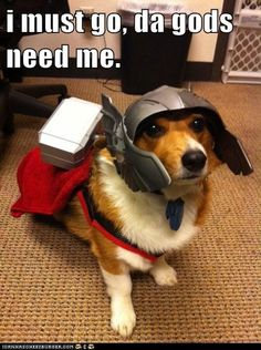 Thor doggie cosplay. View more EPIC cosplay at http://pinterest.com/SuburbanFandom/cosplay/