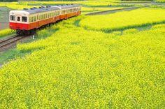 Komiyato railway 小湊鉄道