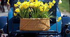 Daffodil Festival Weekend in Nantucket