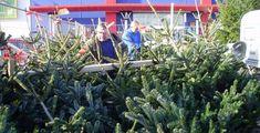 Průzkum: Třetina lidí nekupuje vánoční stromek
