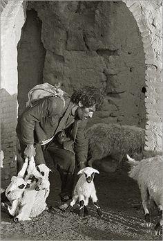 shepherd, afghanistan