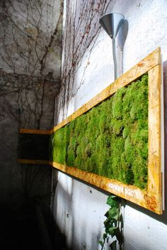Love these moss walls and rainwater collectors by Wayward plants
